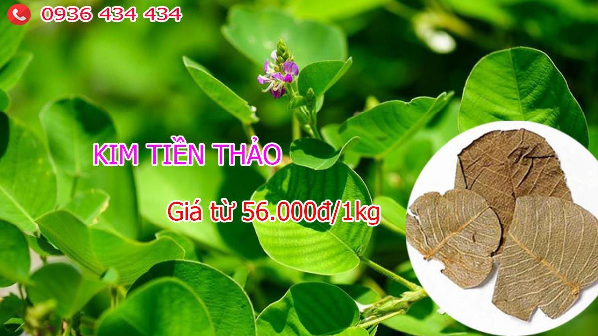 Cây Kim tiền Thảo
