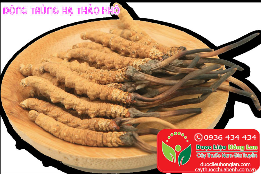 DONG-TRUNG-HA-THAO-KHO-CTY-DUOC-LIEU-HONG-LAN