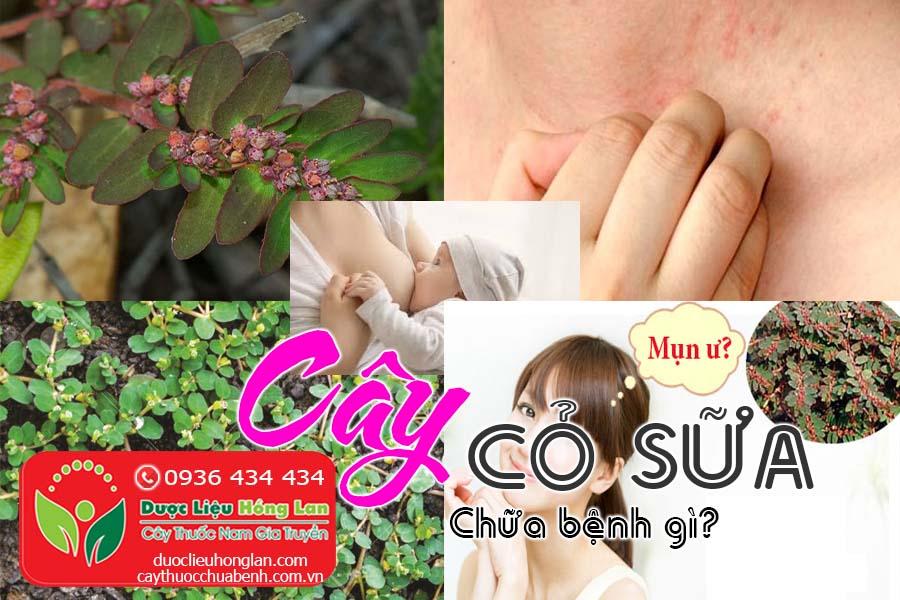CAY-CO-SUA-CHUA-BENH -GI-CTY-DUOC-LIEU-HONG-LAN