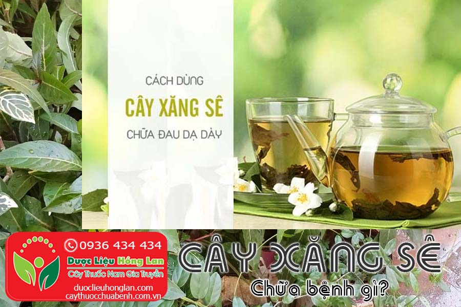 CAY-XANG-SE-CHUA-BENH-GI-CTY-DUOC-LIEU-HONG-LAN