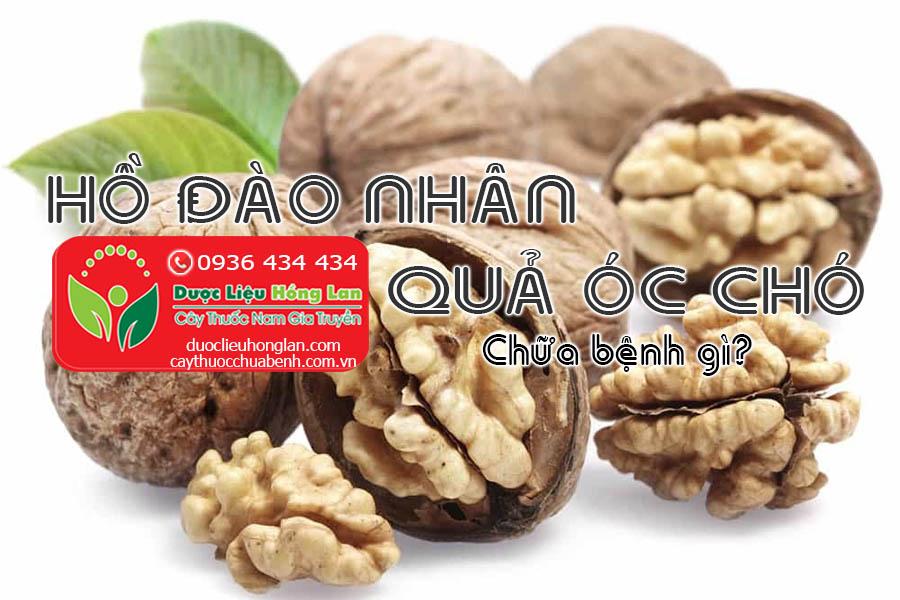 HO-DAO-NHAN-QUA-OC-CHO-CHUA-BENH-GI-CTY-DUOC-LIEU-HONG-LAN