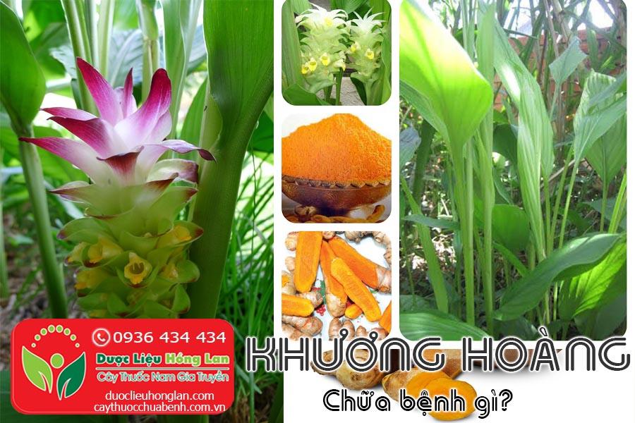 KHUONG-HOANG-BOT-NGHE-CHUA-BENH-GI-CTY-DUOC-LIEU-HONG-LAN