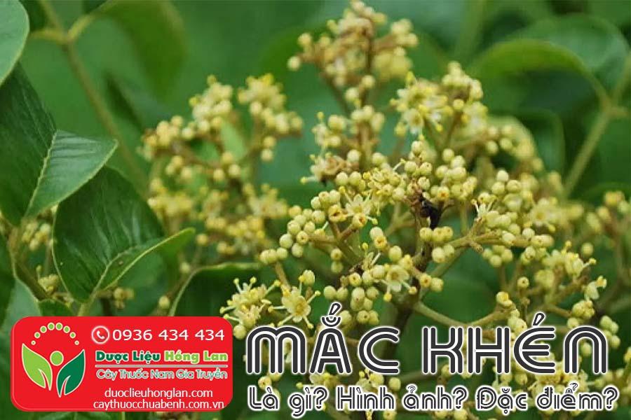 MAC-KHEN-LA-GI-HINH-ANH-SONG-VA-MOC-O-DAU-CTY-DUOC-LIEU-HONG-LAN